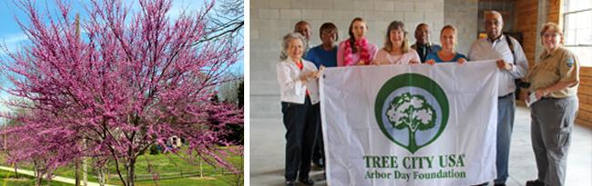 Tree City flag being held by members of the Tree Preservation committee